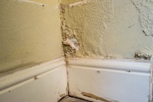 Rising damp compensation claims guide