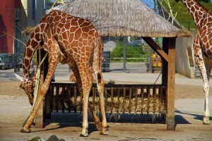 Zoo accident compensation claims guide